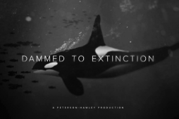 Dammed to Extinction